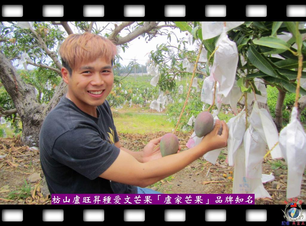 20140430-枋山盧旺昇種愛文芒果「盧家芒果」品牌知名2