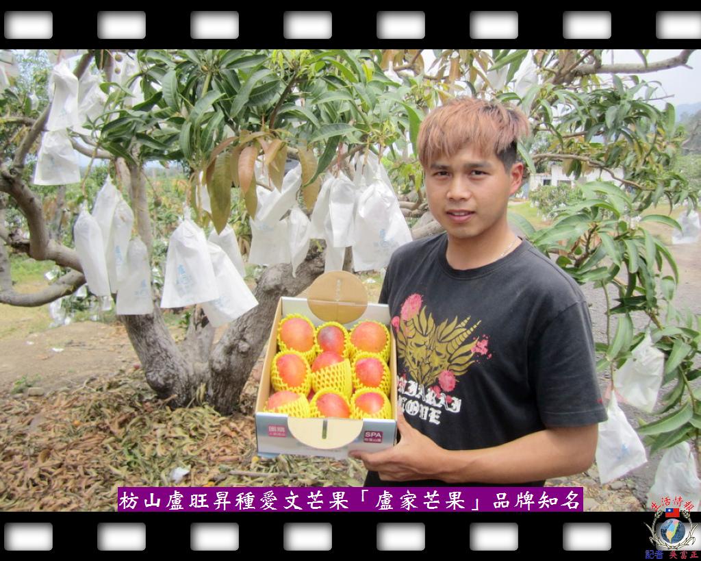 20140430-枋山盧旺昇種愛文芒果「盧家芒果」品牌知名1