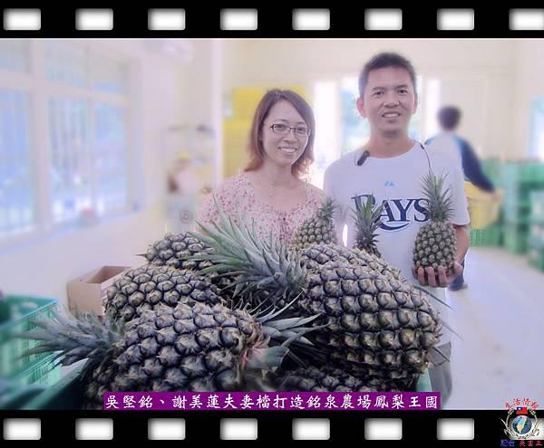 20140527-吳堅銘、謝美蓮夫妻檔打造銘泉農場鳳梨王國1