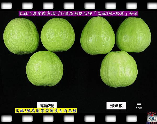 20140528-高雄場番石榴新品種「高雄2號-珍翠」發表2