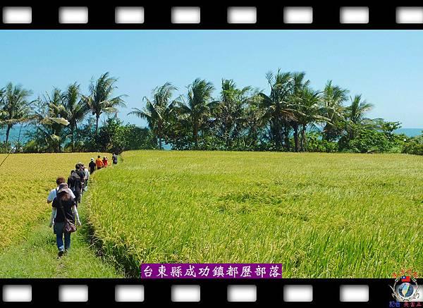 20140604-月桃原鄉都歷部落3