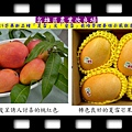 20140618-高雄區農業改良場0619芒果新品種「夏雪」及「蜜雪」栽培管理要領示範觀摩會01