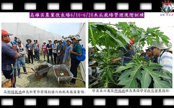 20140630-高雄區農業改良場0616-0620木瓜栽培管理進階訓練02