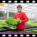 20140822-屏東縣高樹鄉楊家偉栽種菜苗-育種苗70幾種年收入超過百萬