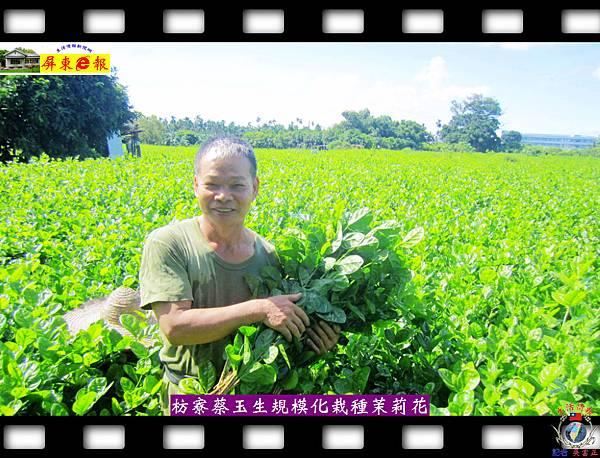 20140828-枋寮蔡玉生規模化栽種茉莉花第一人02