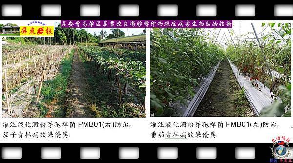 20140828-農委會高雄區農業改良場移轉作物絕症病害生物防治技術01