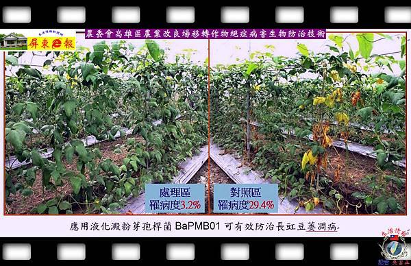 20140828-農委會高雄區農業改良場移轉作物絕症病害生物防治技術03