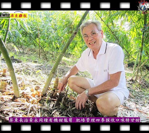 20141003-屏東長治黃永岡種有機甜龍筍-肥培管理四季採收口味特甘甜01