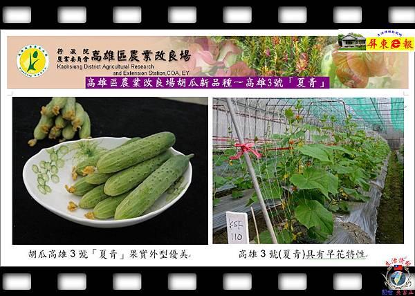 20141006-高雄區農業改良場胡瓜新品種~高雄3號「夏青」02
