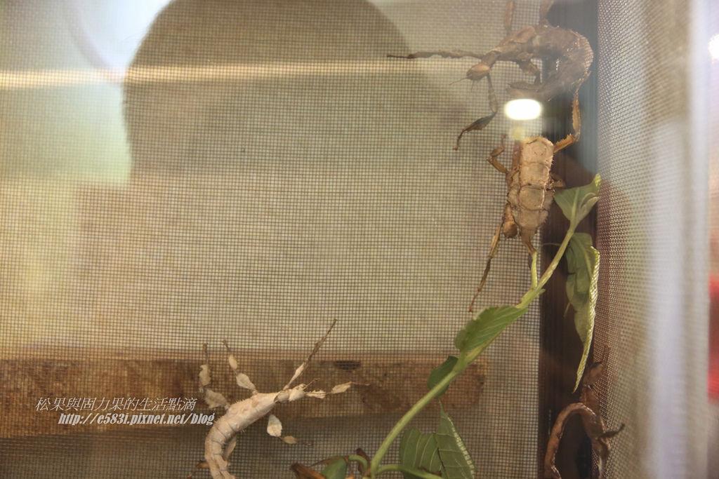 台灣昆蟲館(9月)-33.JPG
