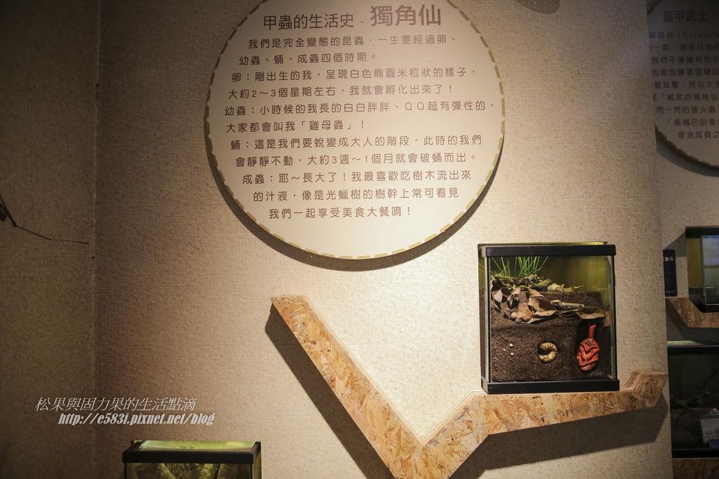 台灣昆蟲館(9月)-41.JPG