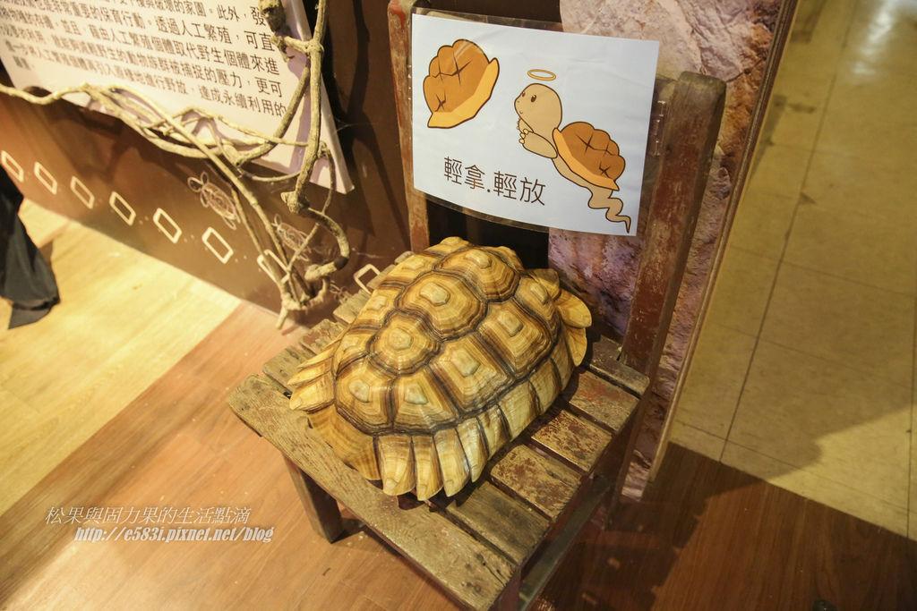 台灣昆蟲館(7月)-44.JPG