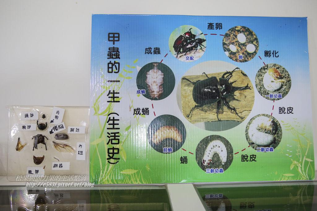 甲蟲森林-120.JPG