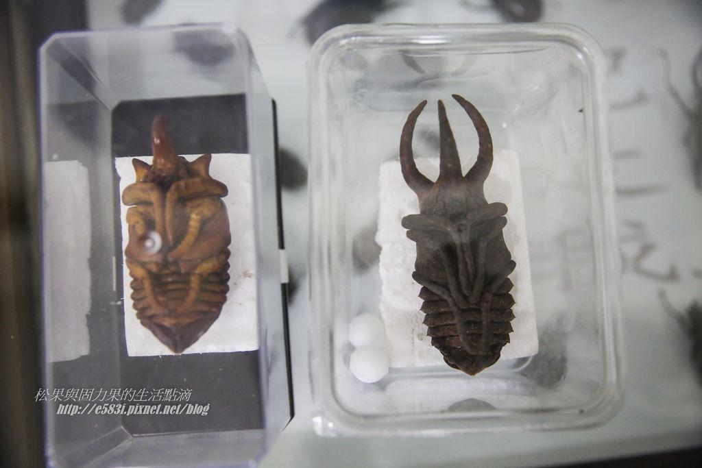 甲蟲森林-179.JPG