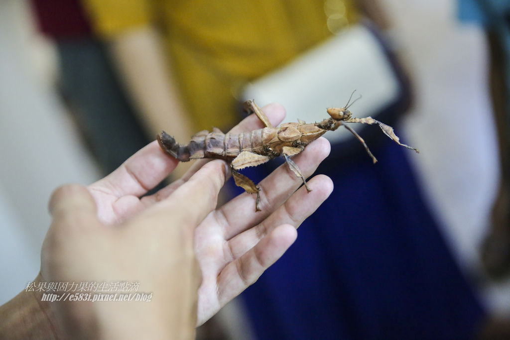 甲蟲森林-200.JPG
