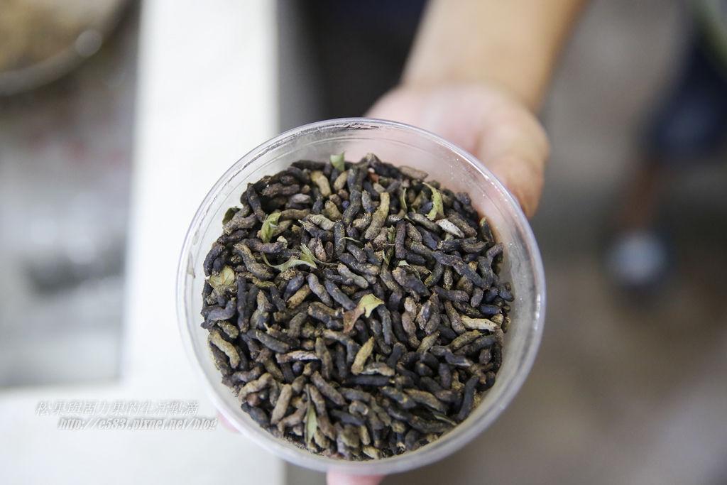 甲蟲森林-213.JPG