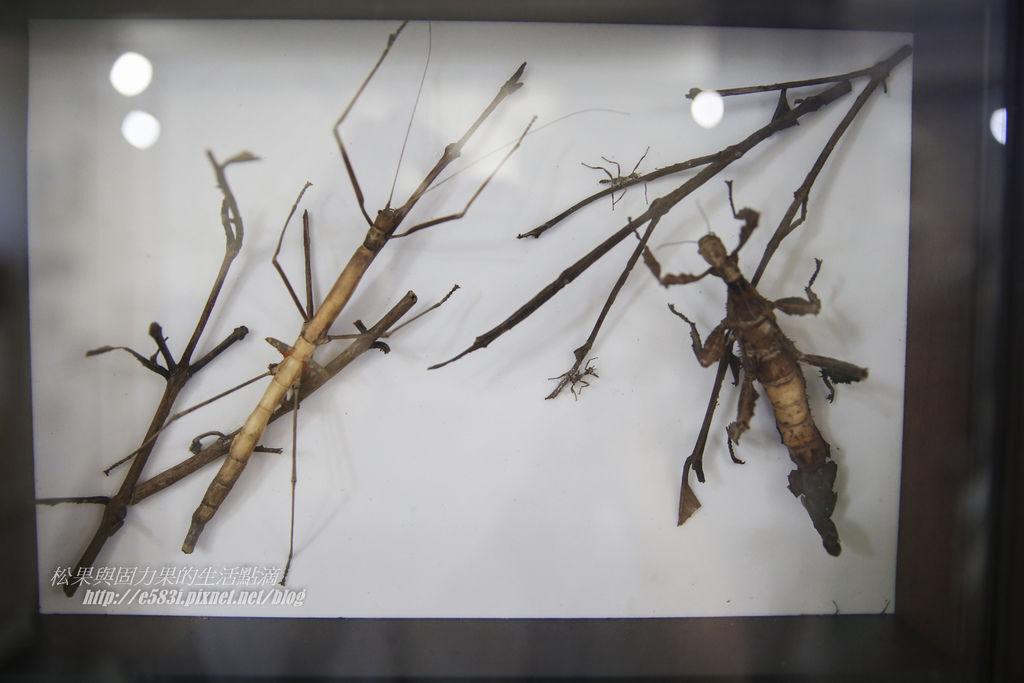 甲蟲森林-280.JPG