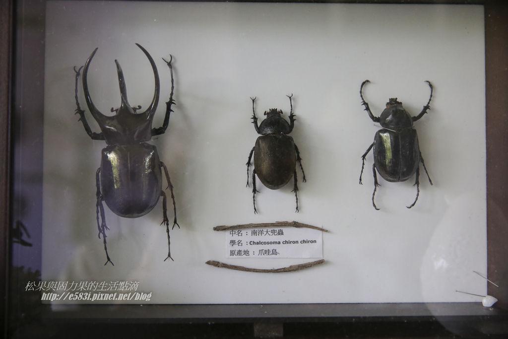 甲蟲森林-316.JPG