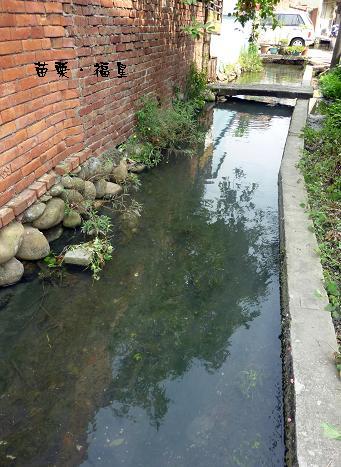 菜園旁的小水溝2.jpg