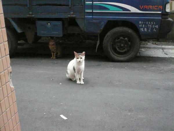 等吃早餐的貓P1120506 (3).JPG