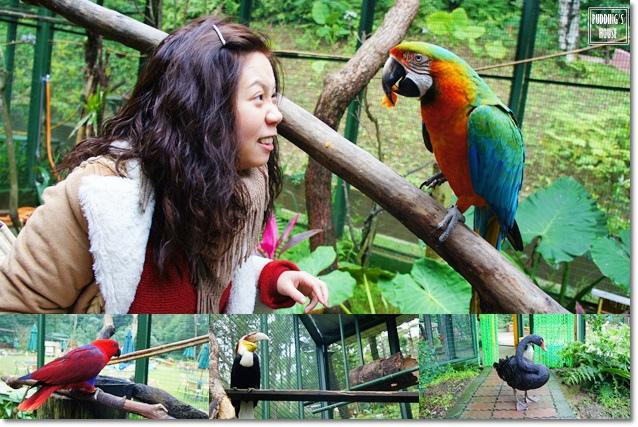 鳥園.jpg