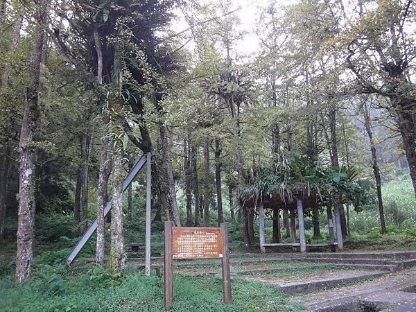 103-10-15溪頭(14).JPG