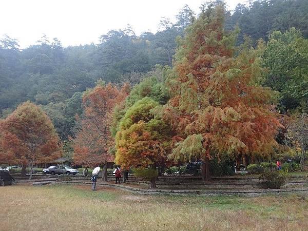武陵農場103-11-12(123).JPG