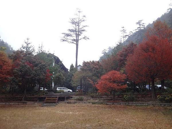 武陵農場103-11-12(124).JPG