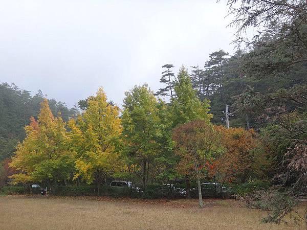 武陵農場103-11-12(125).JPG