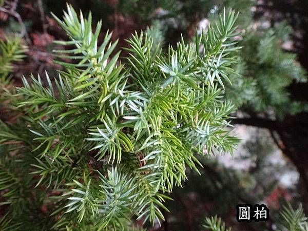 武陵農場103-11-12(153).JPG