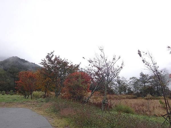 武陵農場103-11-12(210).JPG