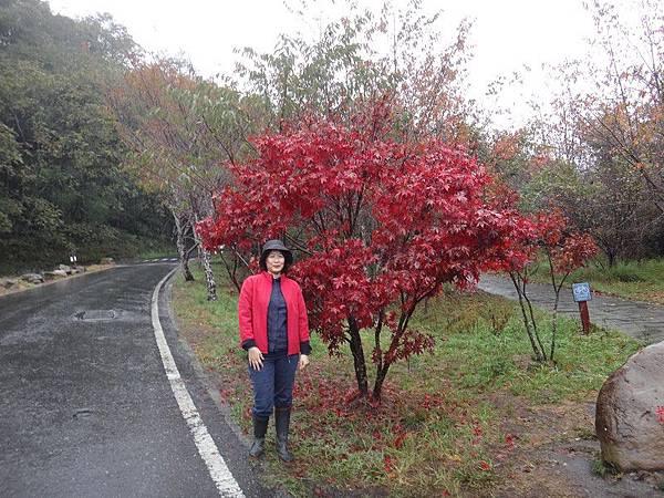 武陵農場103-11-12(216).JPG