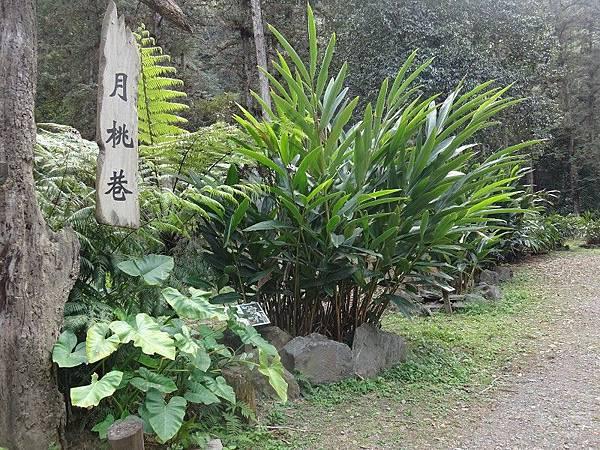 惠蓀林場(19).JPG
