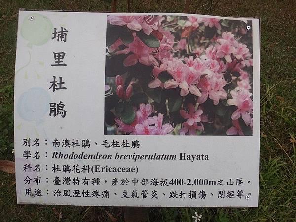 惠蓀林場(35).JPG