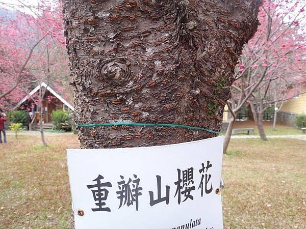 惠蓀林場(47).JPG