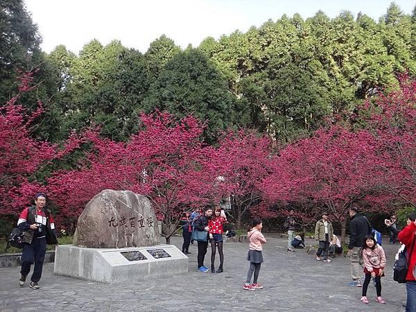 九族櫻花祭(24).JPG