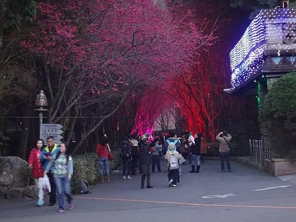 九族櫻花祭(39).JPG