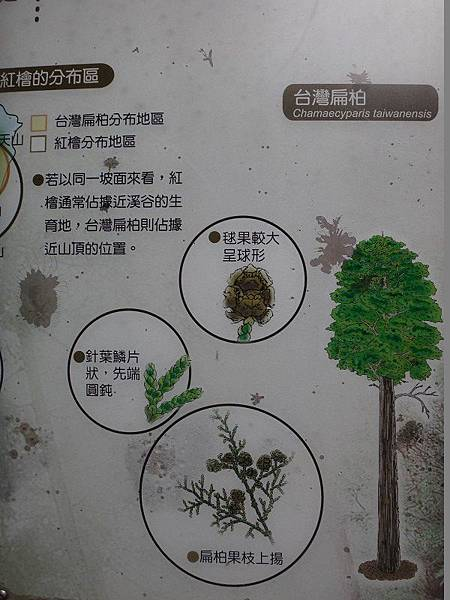 神木群(61).JPG