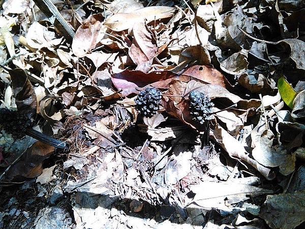 12-筆頭蛇孤-杉林溪(16).jpg