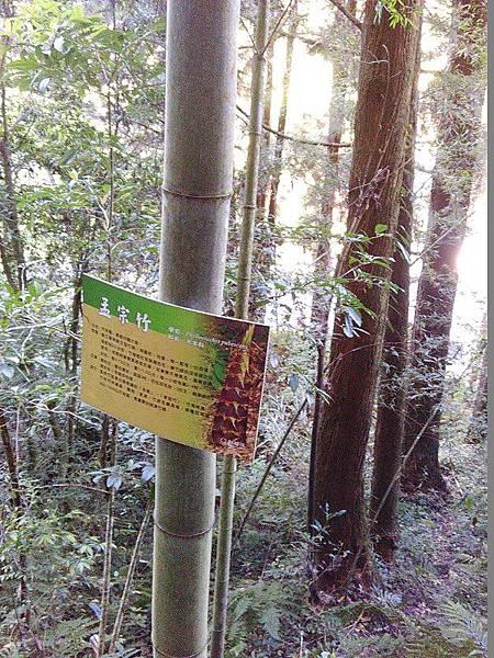 20-孟宗竹-杉林溪(13).jpg