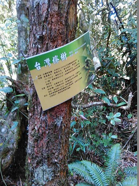 28-台灣察樹(11).jpg