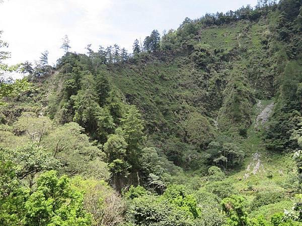 1-八仙山森林(12).JPG