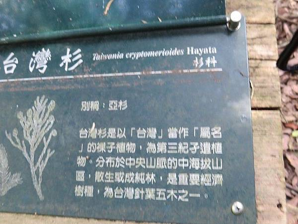 1-八仙山森林(25).JPG
