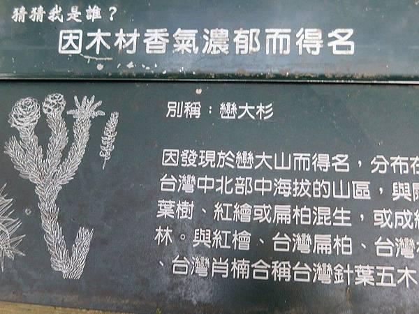 1-八仙山森林(28).JPG