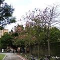 小椰林道 (Palm Ave.)