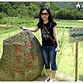 2008.05.16 賞油桐花