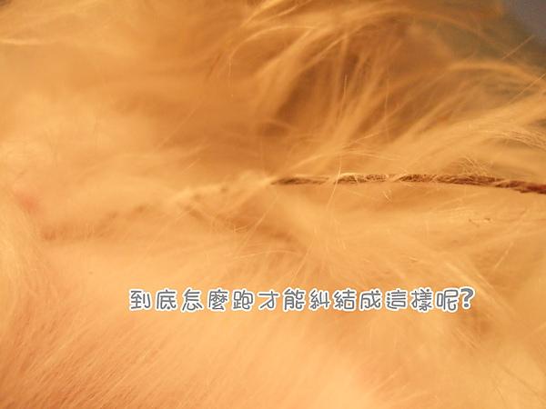DSCF5398.jpg
