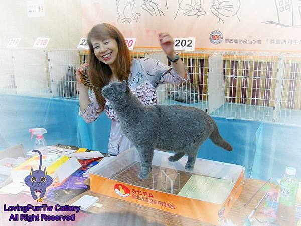 tica貓展的hugo.jpg