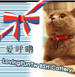 Banner of LovingPurrTw