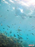 後壁湖近年的海洋生態 7.1..jpg